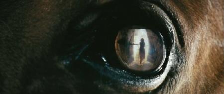 Joeys eye from the Dreamworks SKG film War Horse