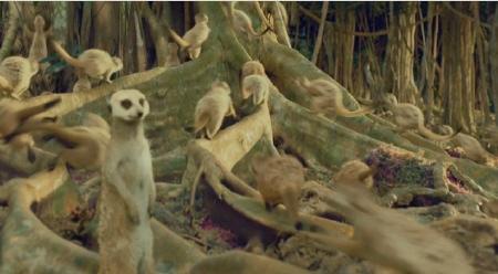 Meerkats life of pi - photo#3