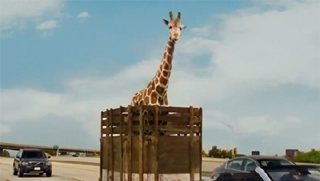Alan and the giraffe from the Legendary Pictures film The Hangover Part 3