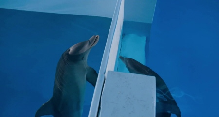 Dolphins from the Warner Bros pictures film Dolphin Tale 2