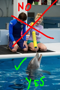Hope the dolphin from the Warner Bros Pictures film Dolphin Tale 2